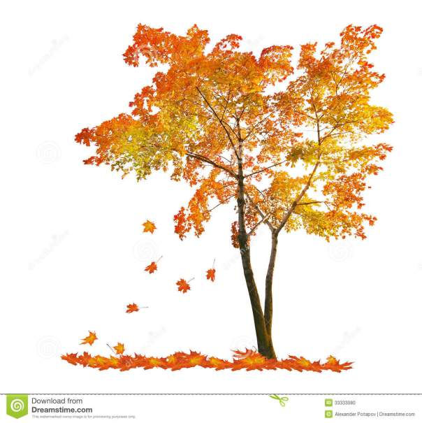 red-autumn-maple-tree-falling-leaves-isoalted-white-background-33333080
